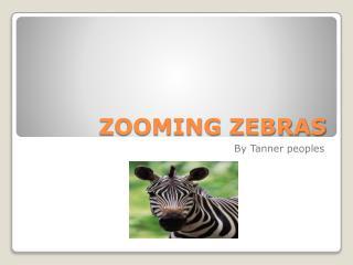 ZOOMING ZEBRAS