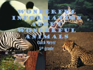 Wonderful information about wonderful animals