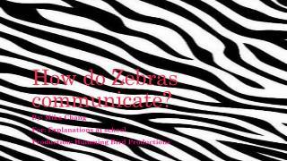 How do Zebras communicate?
