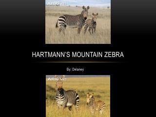 Hartmann�s Mountain Zebra