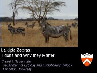 Laikipia  Zebras:   Tidbits and Why they Matter  Daniel I. Rubenstein