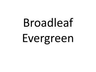 Broadleaf Evergreen