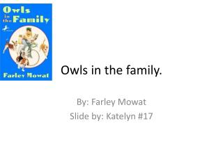 Owls in the family.