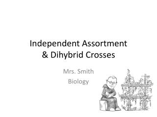 Independent Assortment  & Dihybrid Crosses