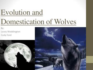 Evolution and Domestication of Wolves