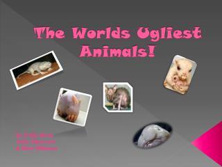 The Worlds Ugliest Animals!