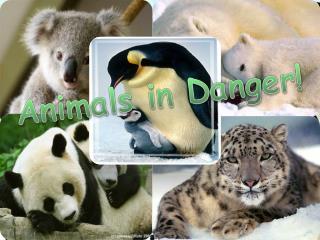 Animals in Danger!