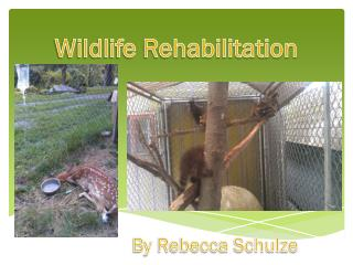 Wildlife Rehabilitation