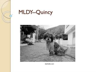 MLDY--Quincy