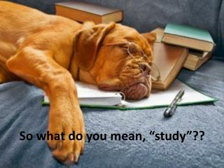 "So what do you mean, ""study""??"