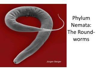 Phylum  Nemata :  The Round-worms