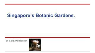 Singapore's Botanic Gardens.