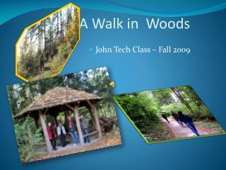A Walk in  Woods