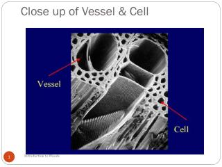 Close up of Vessel & Cell