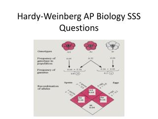 Hardy-Weinberg AP Biology SSS Questions