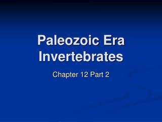 Paleozoic Era Invertebrates