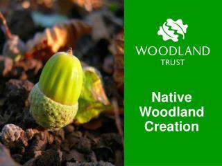 Native Woodland Creation