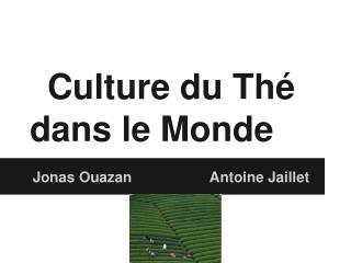 Culture du Thé dans le Monde