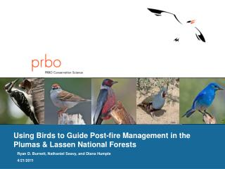 Using Birds  to  Guide Post-fire Management in the Plumas & Lassen National Forests