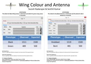 Wing Colour and Antenna Suresh  Nadarajan  &  Senthil  Kumar