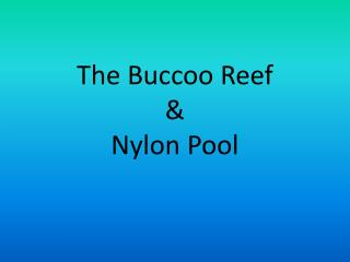 The  Buccoo  Reef  &  Nylon Pool