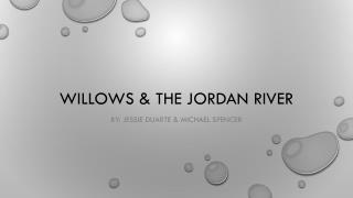 Willows & The Jordan river