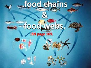 .food chains  &  food webs.