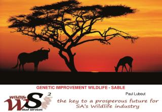 GENETIC IMPROVEMENT WILDLIFE - SABLE