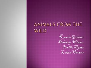 Animals from the wild