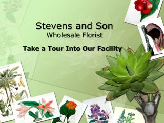 Stevens and Son Wholesale Florist