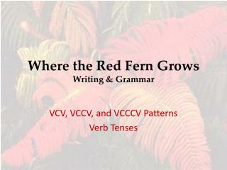 Where the Red Fern Grows Writing & Grammar
