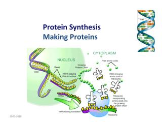 Protein Synthesis  Making Proteins