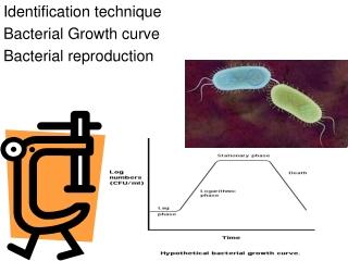 Fast  Cheap Bacteria Sex