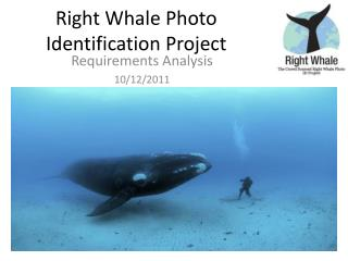 Right Whale Photo Identification Project