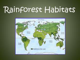 Rainforest Habitats
