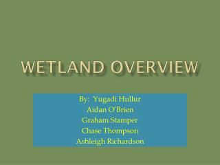 Wetland Overview