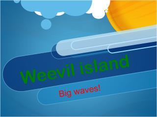 Weevil island