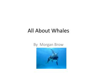 All  A bout Whales