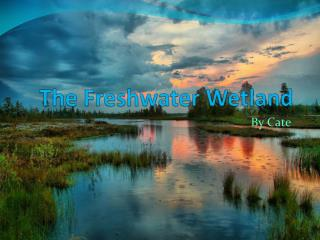 The Freshwater Wetland