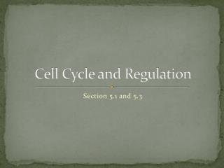 Cell Cycle and Regulation