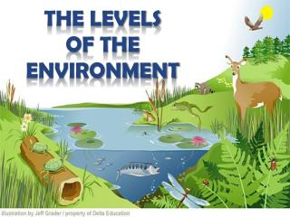 The levels  of the  environment