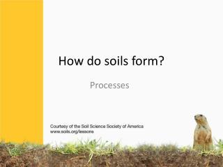 How do soils form?