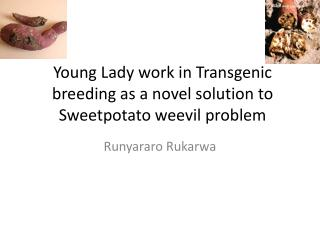 Young Lady work in Transgenic breeding as a novel solution to Sweetpotato weevil problem