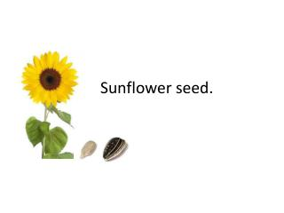 Sunflower seed.
