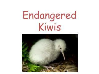 Endangered  Kiwis