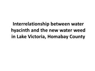 Interrelationship between water hyacinth and the new water weed in Lake Victoria,  Homabay  County