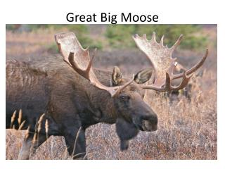 Great Big Moose