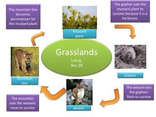 Grasslands Luis g. Rm.19