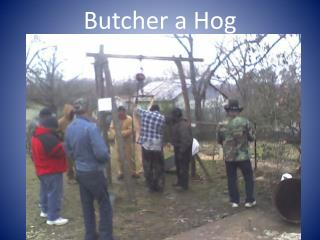 Butcher a Hog