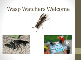 Wasp Watchers Welcome